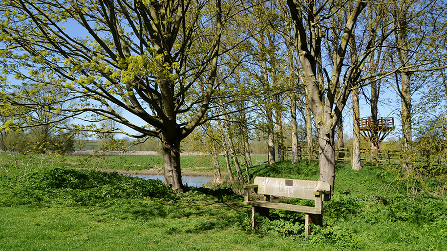 country park bench