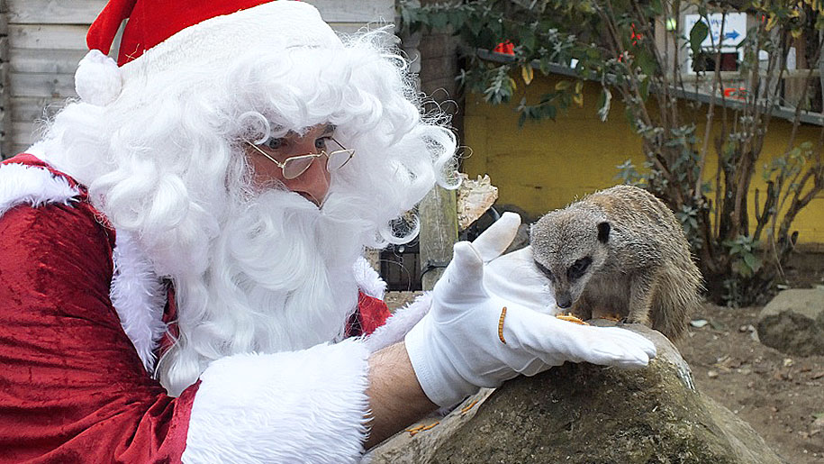 Battersea Park Children's Zoo santa and meercat