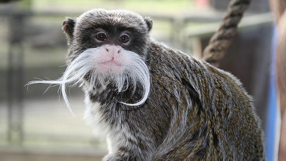 Battersea Park Children's Zoo monkey