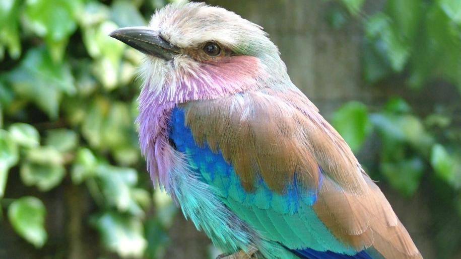 colourful bird at birdworld