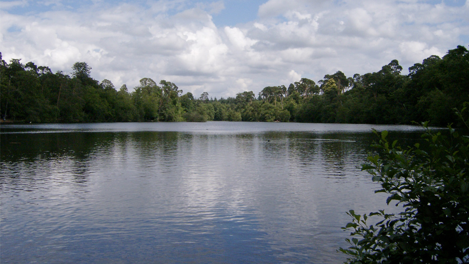 pond with trees on shore