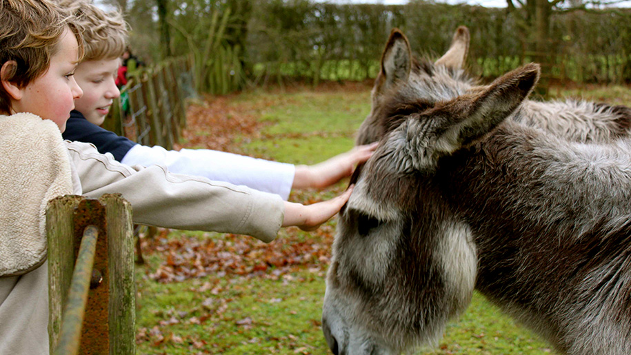 children petting donkey