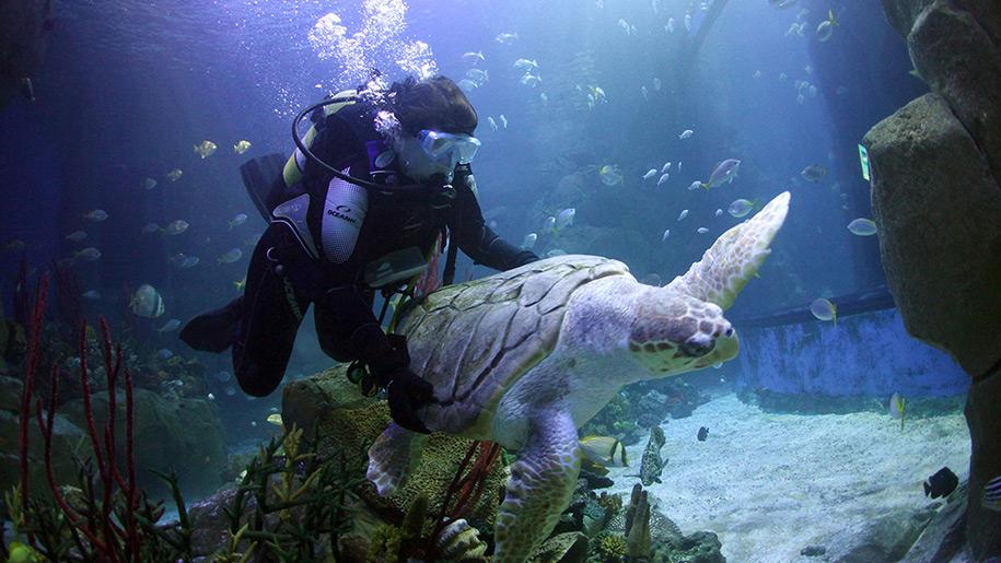 Blue Reef Aquarium Turtle
