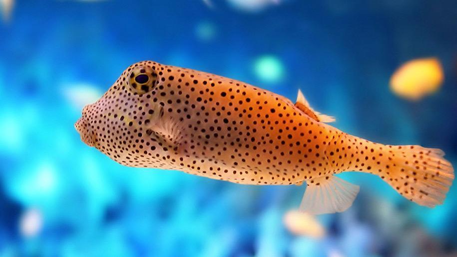 Blue Reef Aquarium Orange Fish
