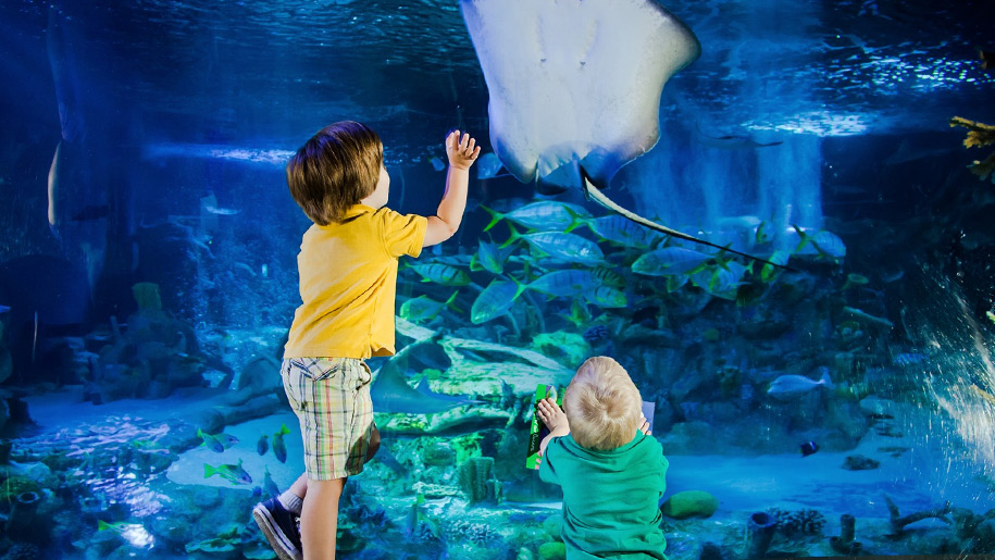 Blue Reef Aquarium Kids Stingray