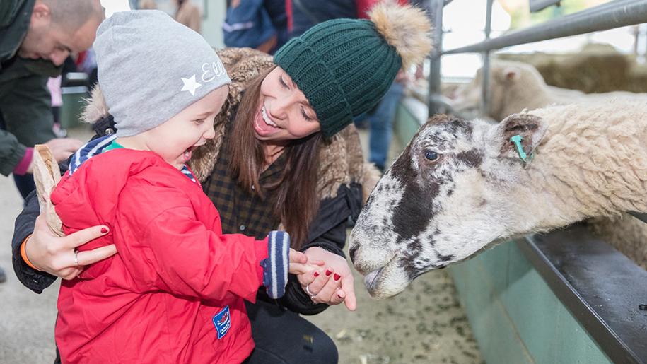 Bocketts Farm Park Feeding goat