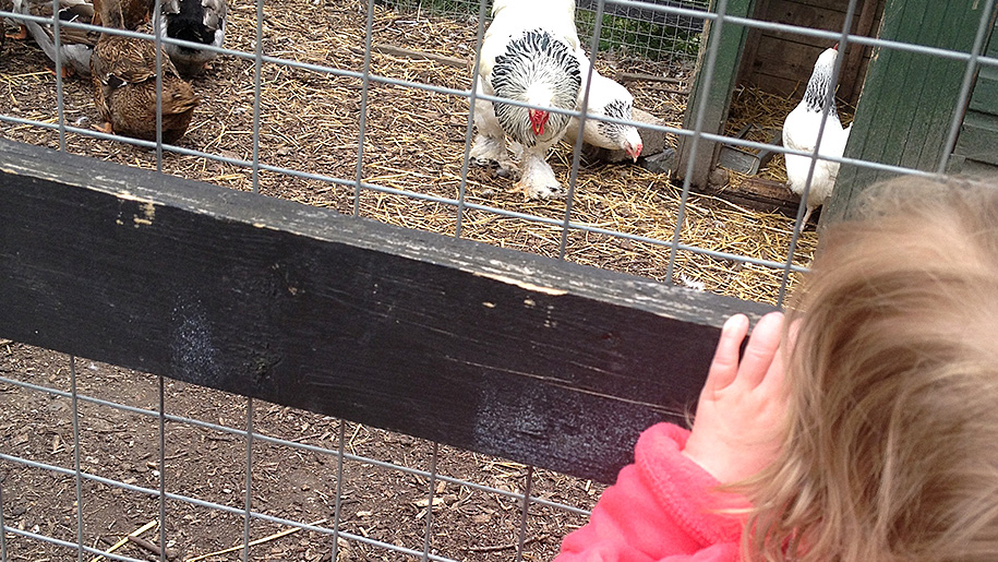 little girl by chicken