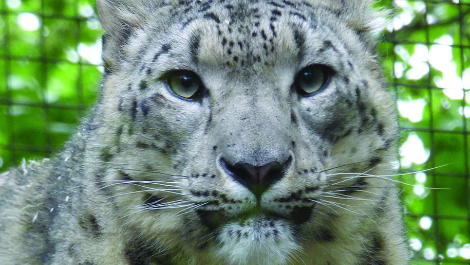Dudley Zoological Gardens Places To Go Lets Go With