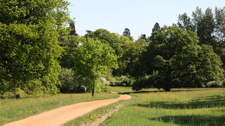 dirt path winding through trees