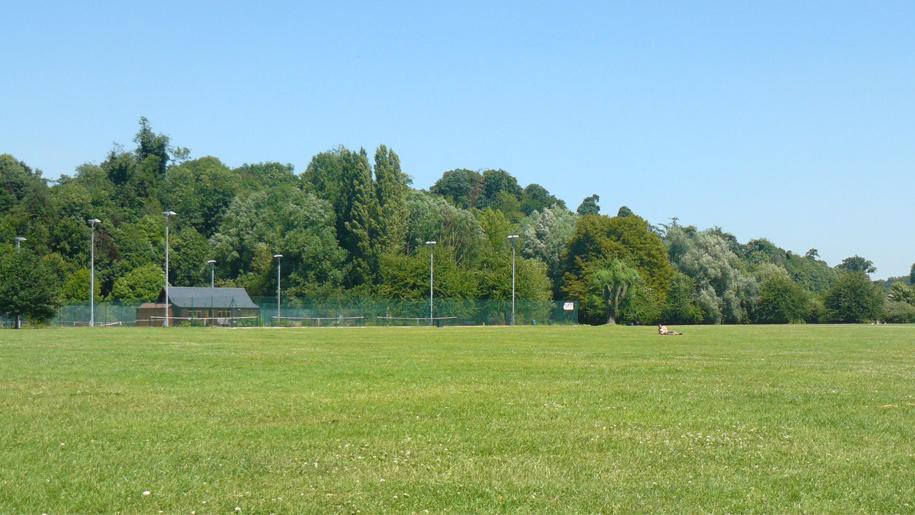 green heath in sunshine