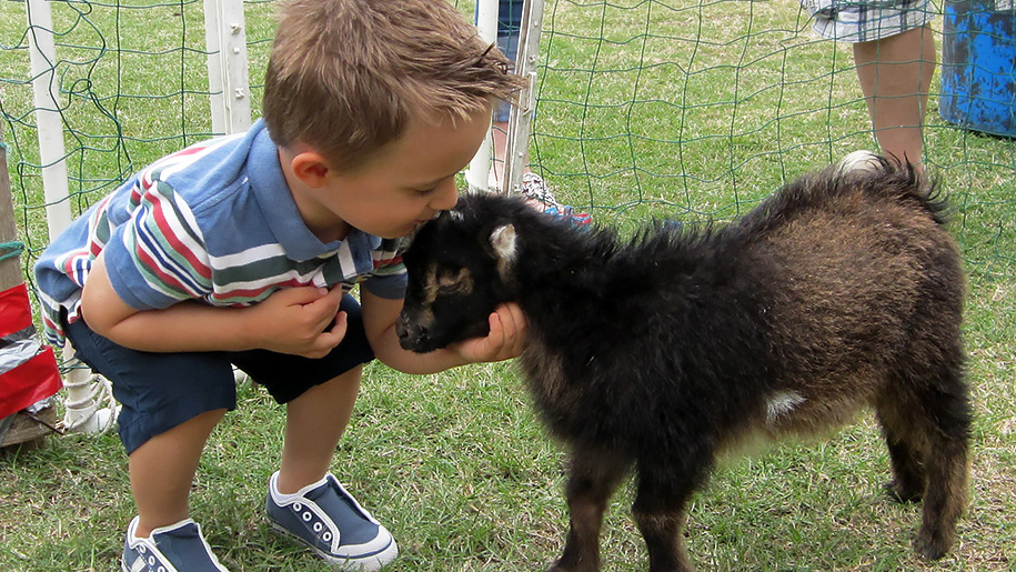 boy kissing lamb