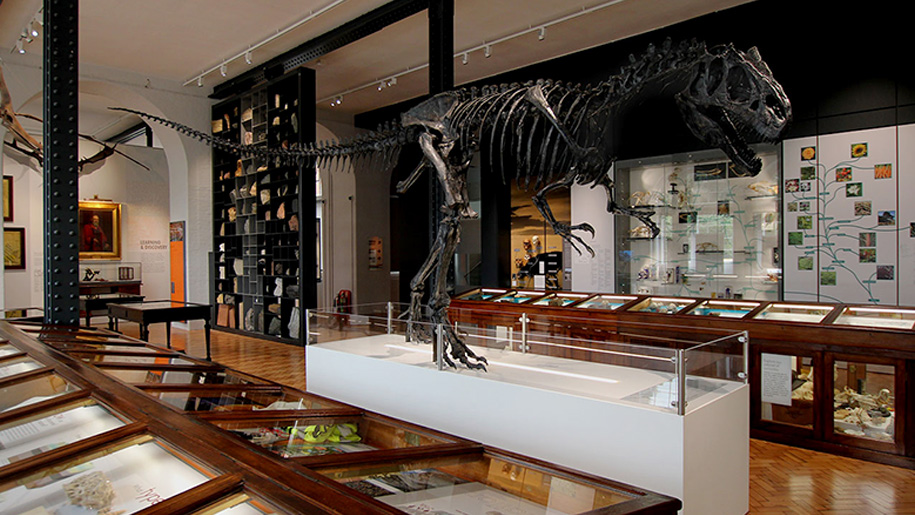 Lapworth Museum Of Geology Places To Go Lets Go With