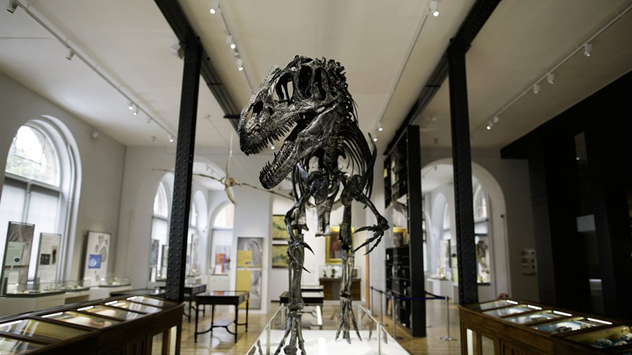 front view of dinosaur skeleton