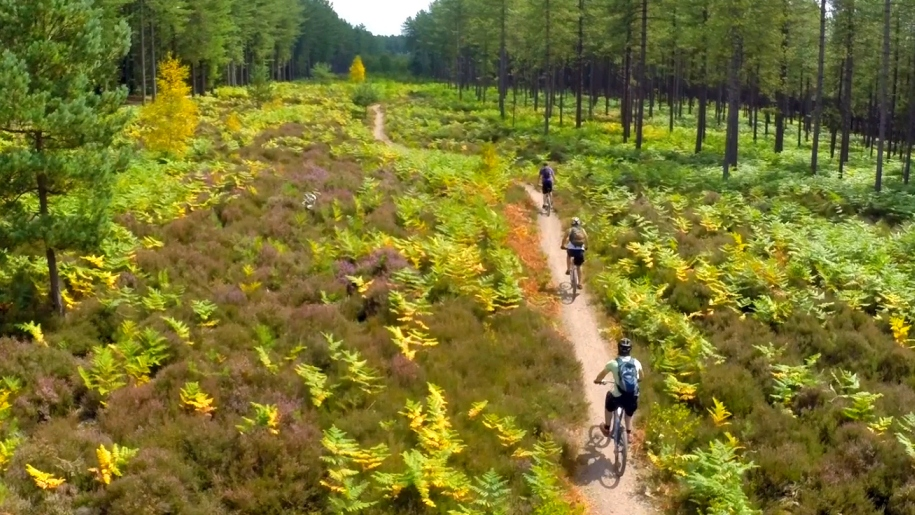 people on bikes in forest