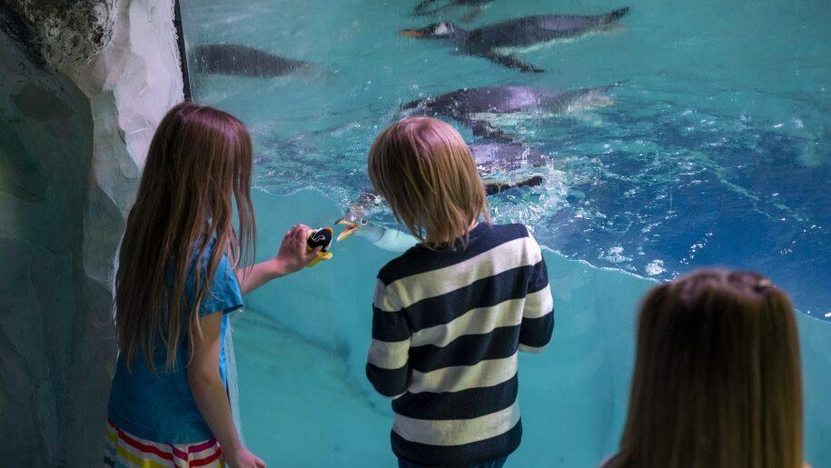 Children at National SEA LIFE Centre Birmingham