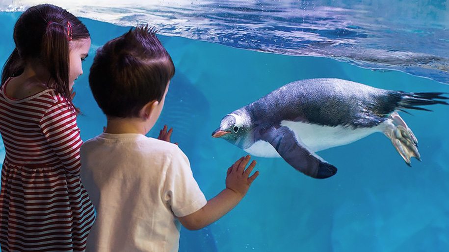 boy looking at penguin
