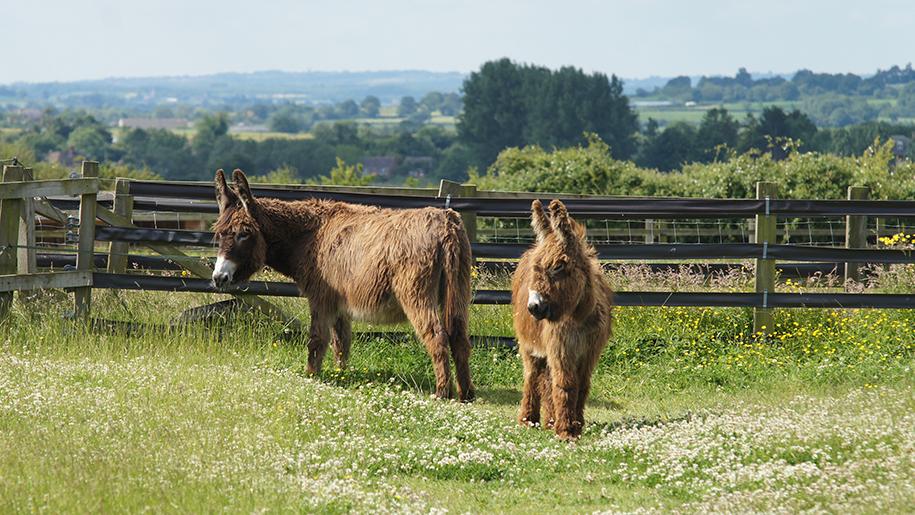 Redwings Oxhill donkeys