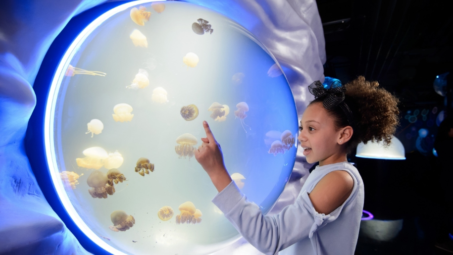 girl looking at jellyfish in aquarium