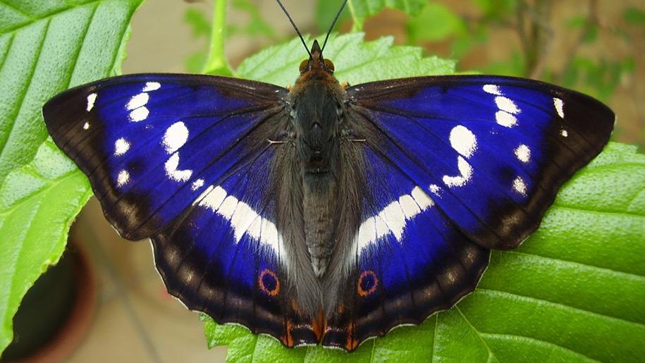 Birdworld Butterfly