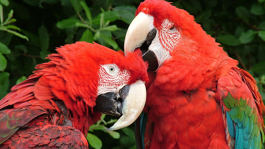 Birdworld Parrots