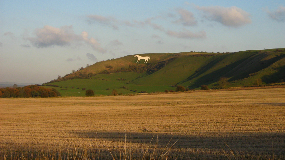 white horse on hill