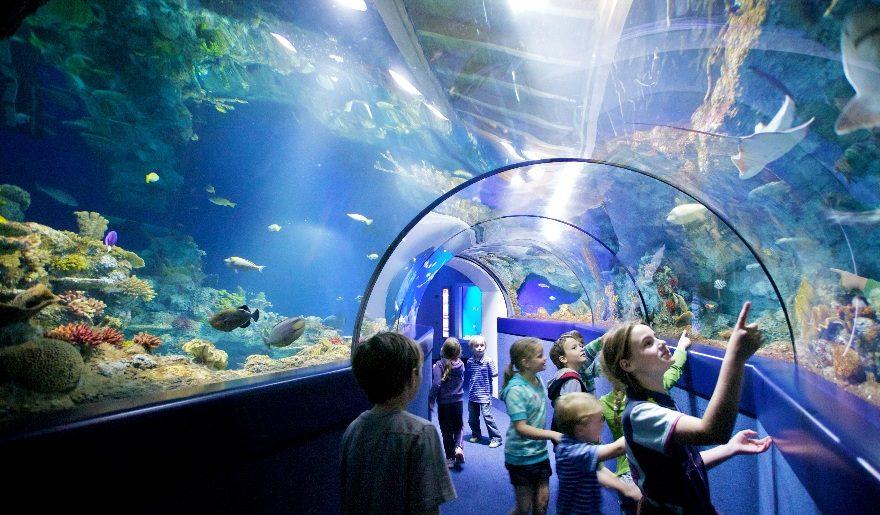 Address To Newport Aquarium