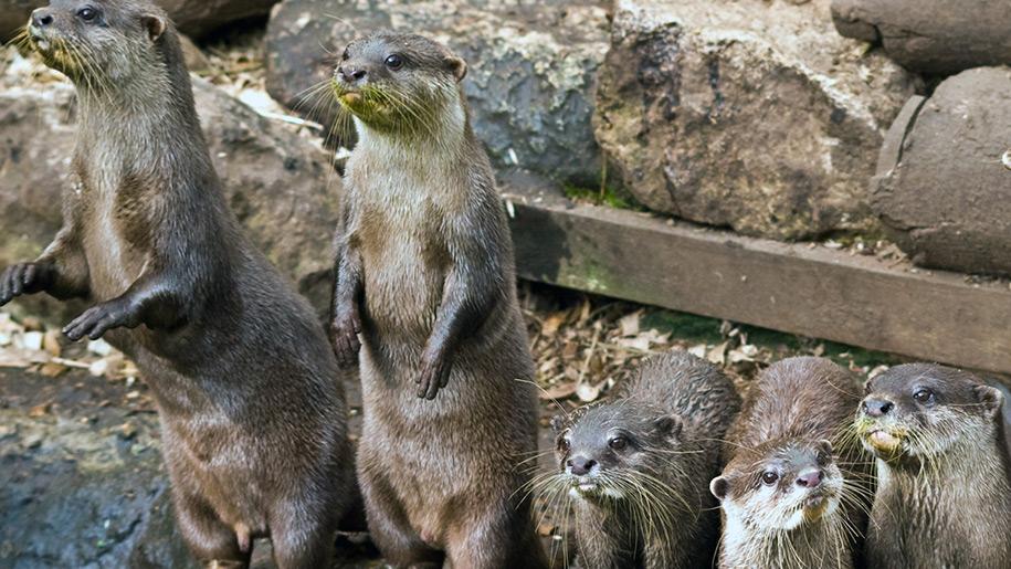 Chestnut Centre Otter Owl and Wildlife Park Otters
