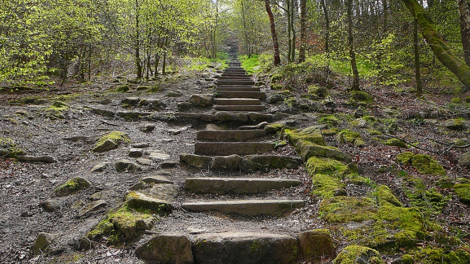 chevin forest steps