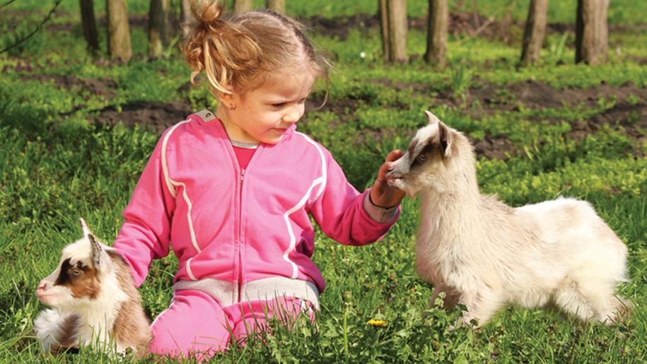 cholderton Charlies Farm child with goats