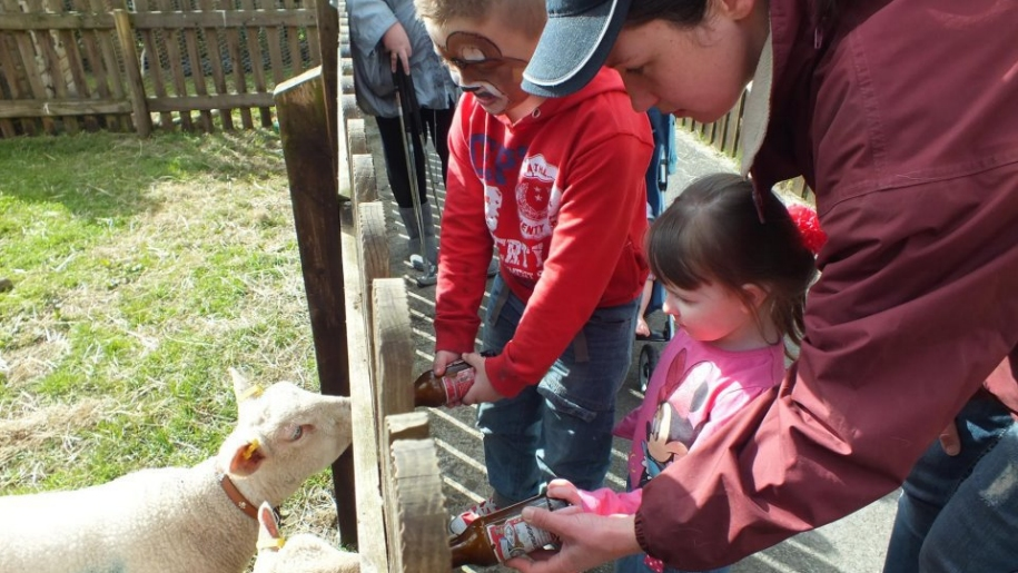 kids feeding lambs