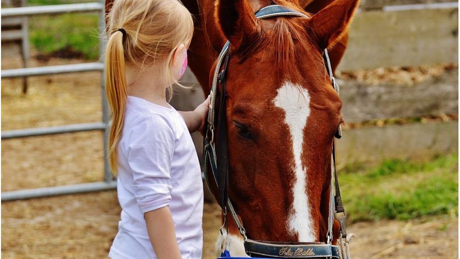 girl stroking horse