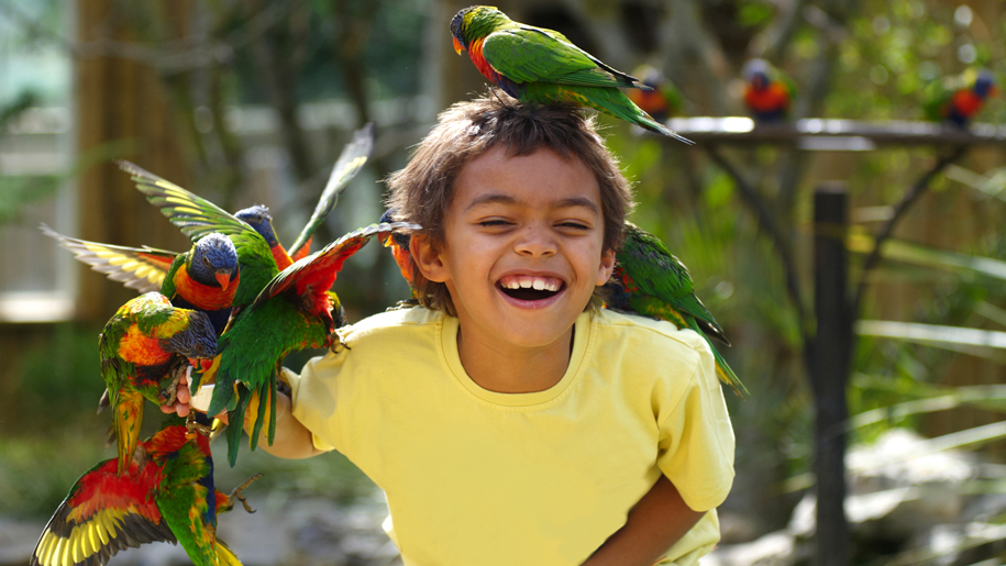 Drusillas Park Boy with Parrots