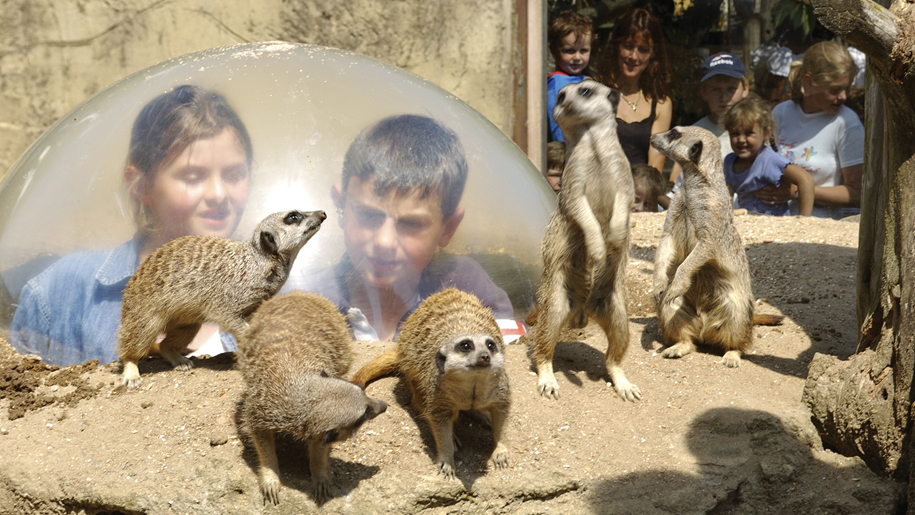 Drusillas Park kids with meerkats