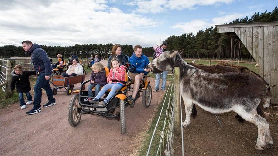 family on peddle cart feeding donkey