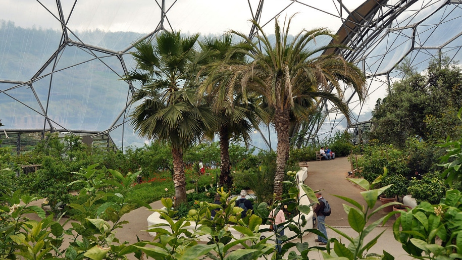 plants inside the eden project