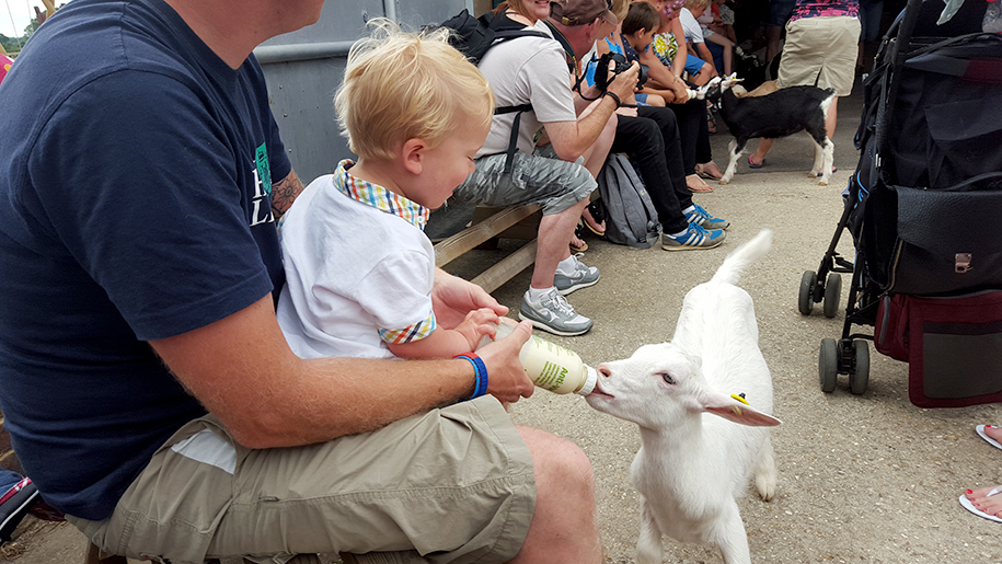 Farmer Palmers child feeding lamb