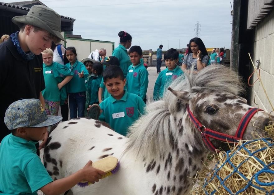 children grooming horse