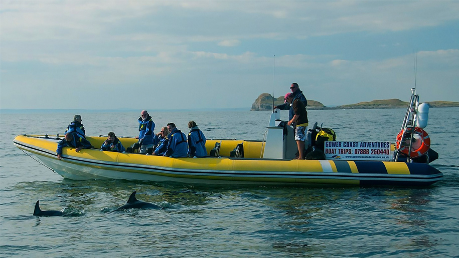 group on boat looking at dolphin