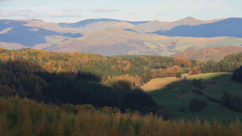 grizedale forest view