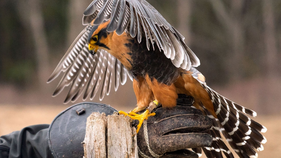 International Centre Of Birds Of Prey Places To Go Lets Go With The Children