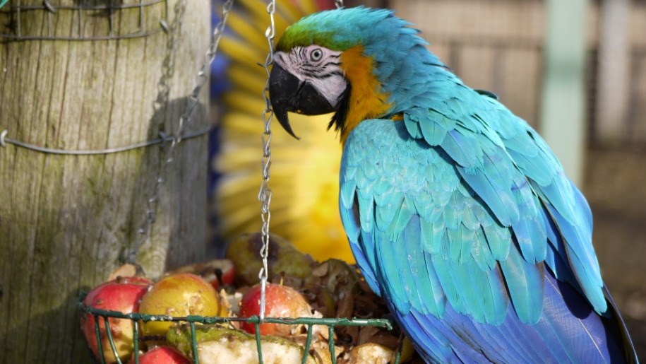 parrot and fruit