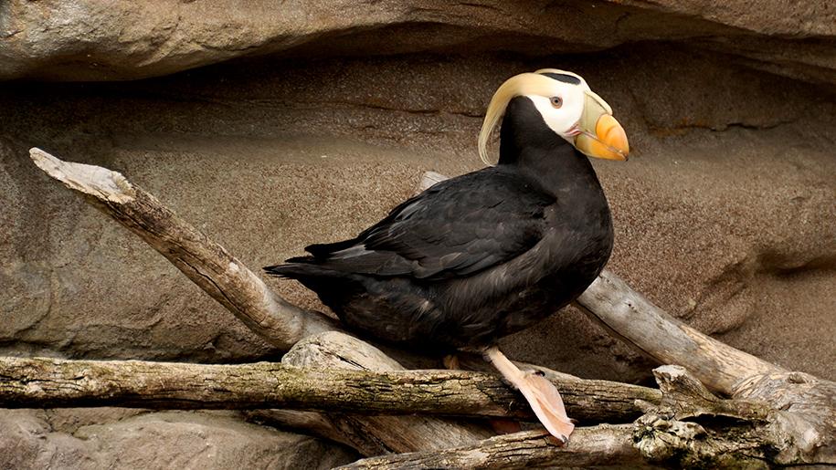 Living Coasts Bird