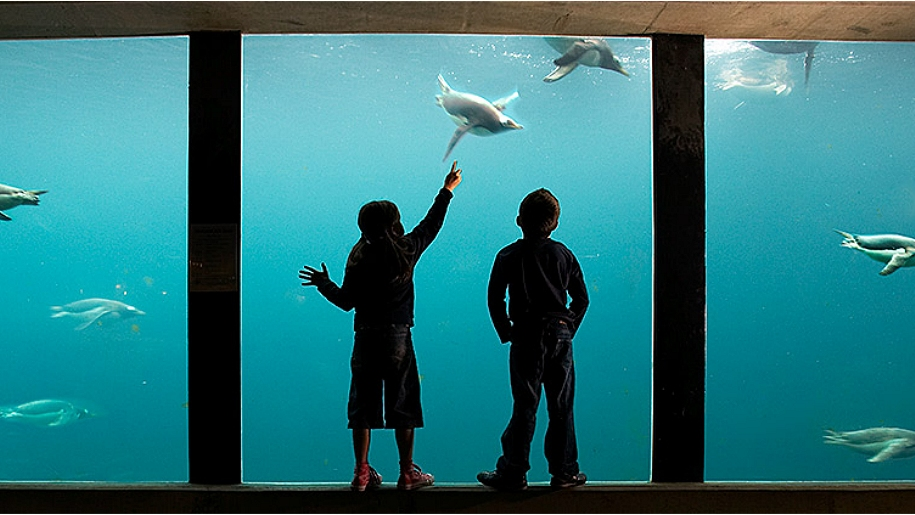 children pointing in aquarium