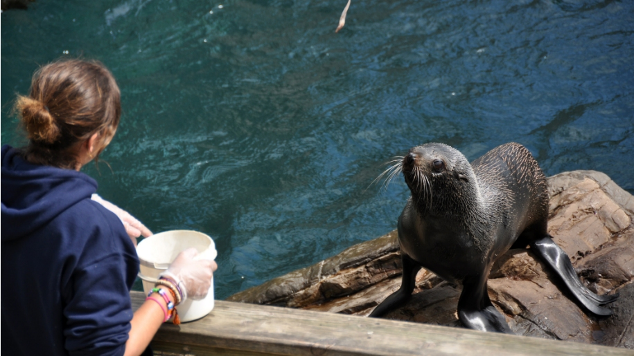 seal being fed