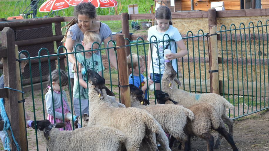 Children with sheep at Lower Drayton Farm