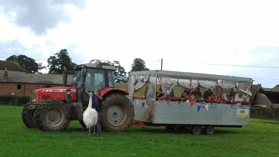 Tractor at Lower Drayton Farm