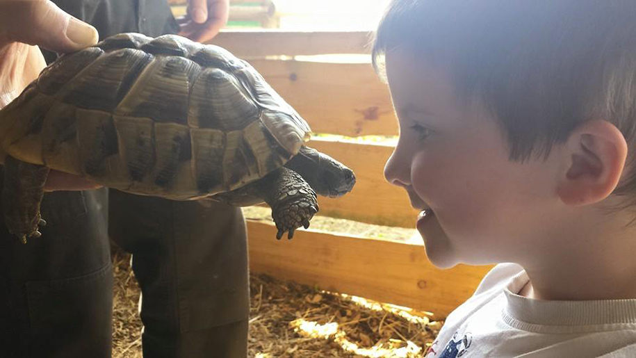 boy and tortoise