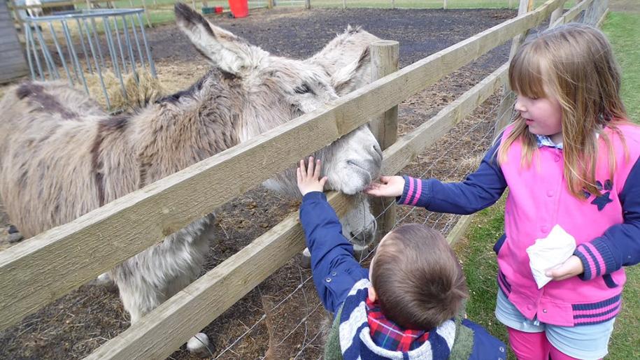 children feeding donkeys