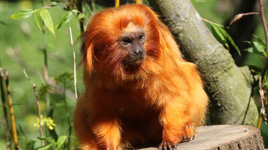 Paignton Zoo little monkey