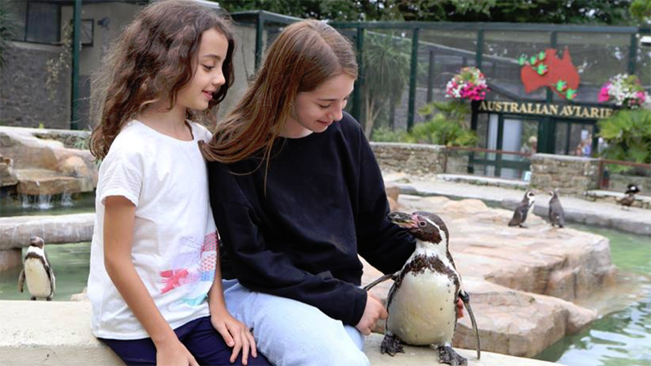 girls stroking a penguin